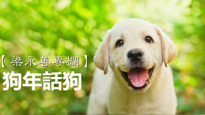 dog2_meitu_6